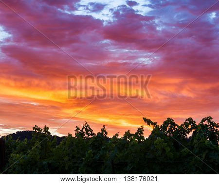 Vibrant, colorful clouds at sunset over a Napa Valley vineyard. A spectrum of saturated colors in the sky. Purple, pink, yellow dramatic clouds. Sunset in a California vineyard.