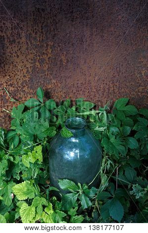 Metal rustic background and big glass jar with leaves of climbing plant and copy space