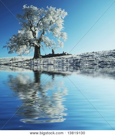 Alone frozen tree reflection