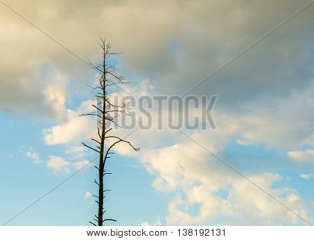 Beautiful Cloudy Sky With Withered Tree