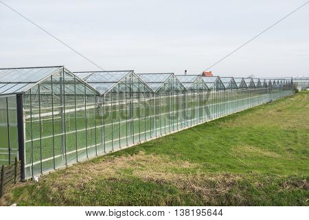 Frontage of a Greenhouse in 'het Westland' the Netherlands