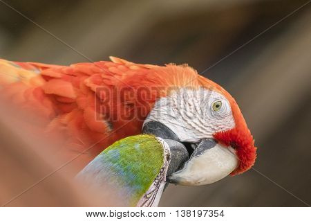 South American Parrots At Zoo