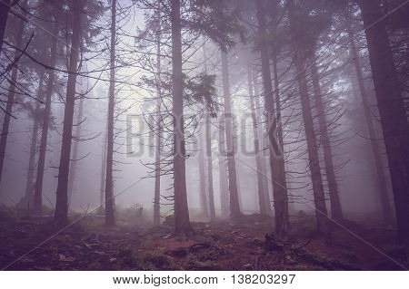 Fog In The Haunted Forest In Summer