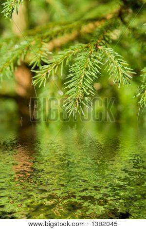 Rama del árbol de la piel con gotas y una Web sobre el agua