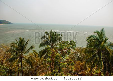 Palm Trees And The Sea. Goa. India
