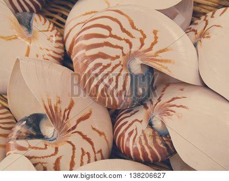 empty nautilius shells close up background, retro toned