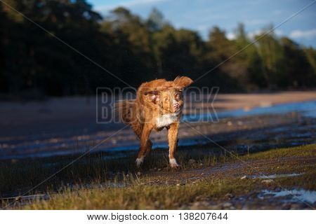 Dog On The Beach, Summer Walks On Water
