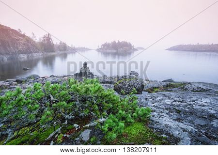 Juniper bush on stone beach in the fog