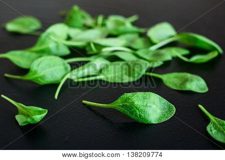 Fresh green spinach leaves on a black background, close up