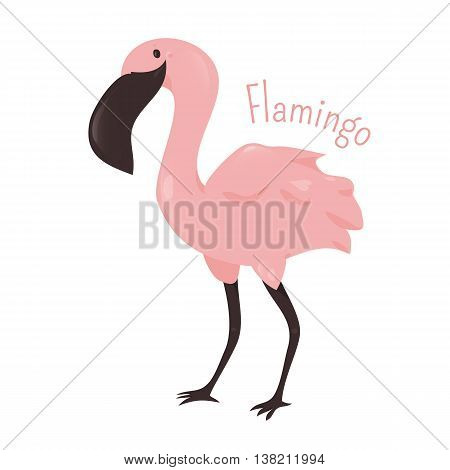 Flamingo isolated on white background. Flamingoes. Type of wading bird in e family Phoenicopteridae. Part of series of cartoon savannah animal species. Sticker for kids. Child fun pattern icon. Vector