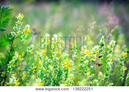 summer flowers meadow - soft focus photo