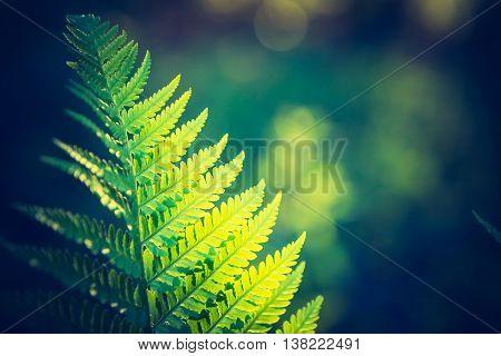 Vintage Photo Of Beautiful Fern Leaves