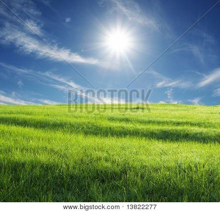 prado verde y soleado cielo