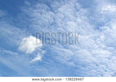 White Cloud.