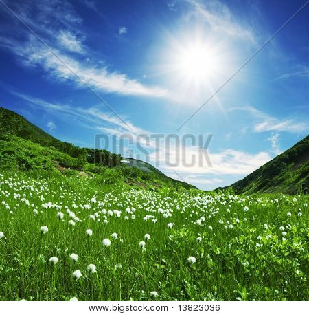 Summer meadow in sunny weather