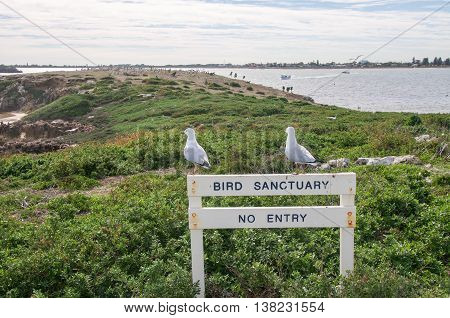 Two sea gulls standing on Bird Sanctuary sign at Penguin Island with nesting pelicans in the background with the Indian Ocean under a cloudy sky in Rockingham, Western Australia.