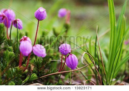 Blumen auf bergwiese