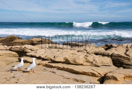 Large Indian Ocean waves with limestone rock on the beach with two sea gulls under a blue sky with clouds at Penguin Island in Rockingham, Western Australia.