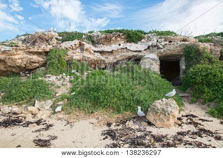 Limestone caves on Penguin Island with nesting birds and native flora under a blue sky with clouds in Rockingham, Western Australia.