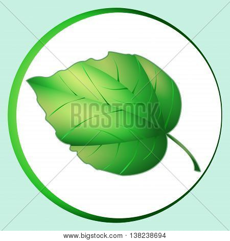 Lime leaf. Yellow-green oak leaf the volume on the light green background.