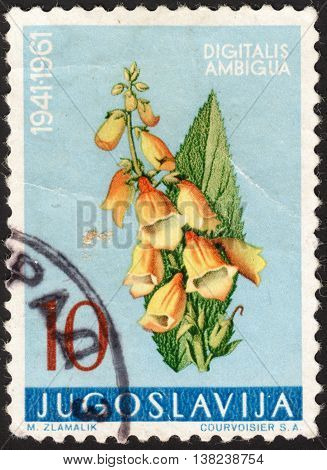 MOSCOW RUSSIA - JANUARY 2016: a post stamp printed in YUGOSLAVIA shows a flower with the inscription