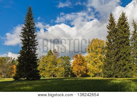Autumn park with various trees. Blue sky with clouds colored leaves and evergreen spruce