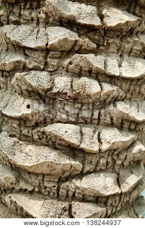 Palm tree bark close-up background. Palm trunk texture