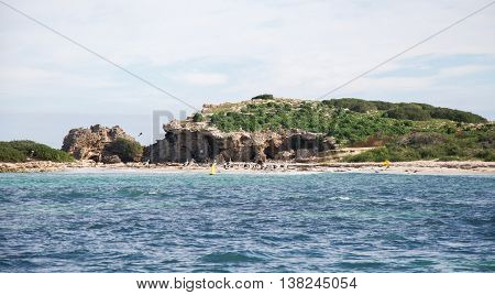 Remote island with limestone rock and native flora off the Indian Ocean coast of Rockingham, Western Australia with pelicans, cormorants and a sea lion under a blue sky with clouds.