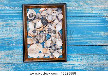 Sea shells in photo frame. On blue wooden planks background