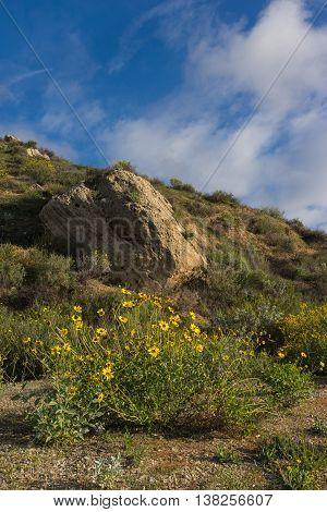 Yellow Wildflower In Hills
