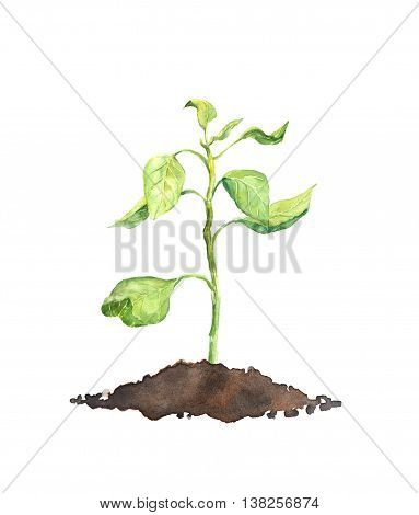 Spring sprout - green plant. Watercolor botanical illustration