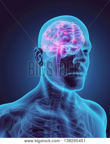 3D Illustration Of Human Internal Organic - Brain.