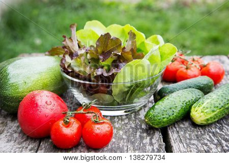 fresh organic vegetables on a rustic table in the garden.
