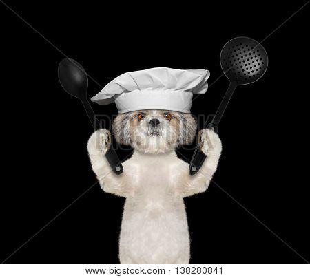 Dog chef is going to prepare meals -- isolated on black