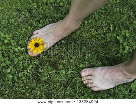 Male bare feet with a yellow flower between the fingers stepping down the grass. Overhead horizontal shot