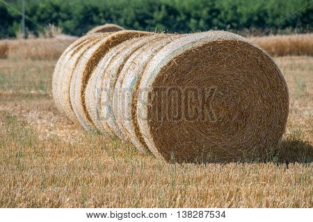 Packed Hay Bale Harvested Fodder Balls Ready