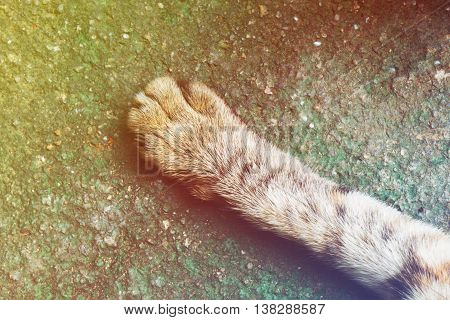 Legged cat on old rough floor with vintage tone background