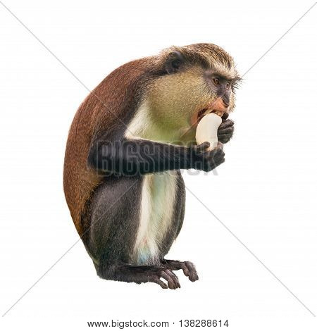 Monkey with a banana on a white background