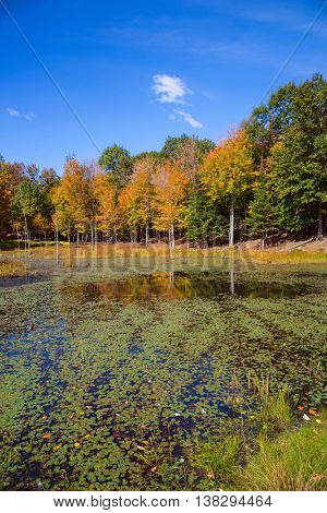 Warm autumn park  in Canada. Adorable little lake overgrown with water plants
