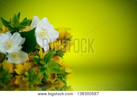 beautiful yellow summer flowers on a green background