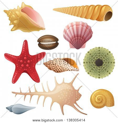 Bright highly detailed seashell icons