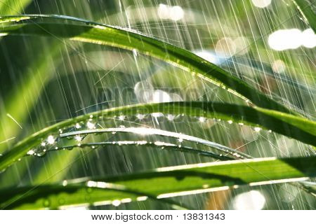grass in garden for rain