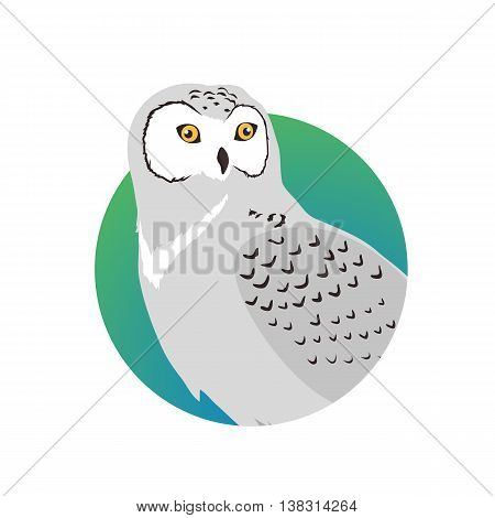 Snowy owl vector. Predatory birds wildlife concept in flat style design. North fauna illustration for , encyclopedia, childrens books illustrating. Beautiful snowy owl bird seating isolated on white.