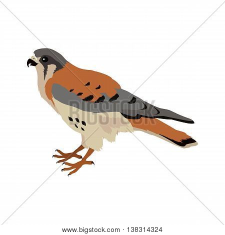American kestrel vector. Predatory birds wildlife concept in flat style design. American fauna illustration for prints, posters, childrens books illustrating. Beautiful falcon bird seating isolated on white.