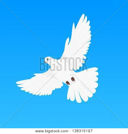 Pigeon vector. Religion, wedding, peace, pacifism, concept in flat design. Illustration for religion attributes, childrens books illustrating. White pigeon flying wings spread isolated on blue.