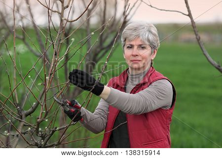Women Pruning Apple Tree In Orchard