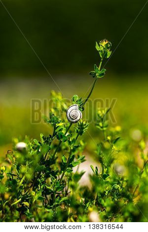 Small snail is taking a rest on a plant.