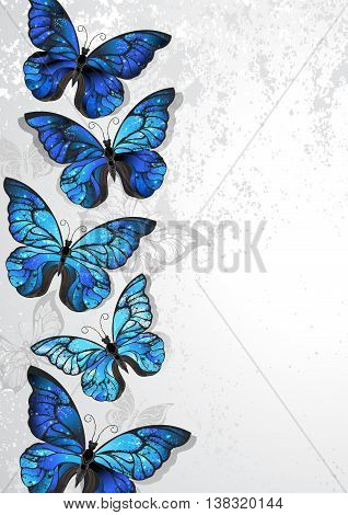 Design with artistically painted butterflies morpho with iridescent blue wings on a gray textural background. Morpho. Design with blue butterflies morpho.