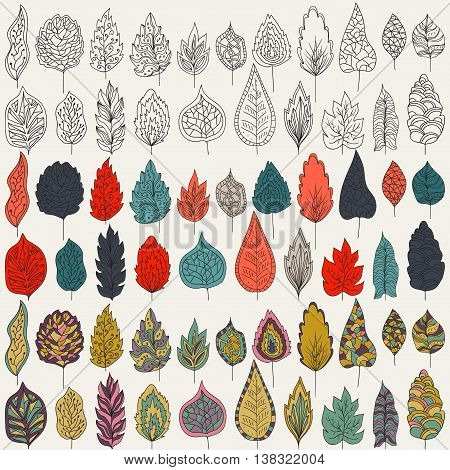 Vector set of leaves, outline, colors and milticolors variants. Isolated on white background for seasonal design. Collection of hand-drawn leaves on a white backdrop.