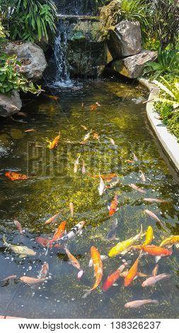 Koi Pond, Fish Pond